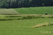 Verläufe alter Entwässerungsgräben in den Nette - Wiesen