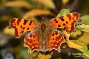 So langsam verabschieden sich die Schmetterlinge