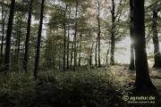 Im herbstlichen Wald, etwas weich gezeichnet
