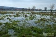 Kleineres Hochwasser in den Nettewiesen bei Werder