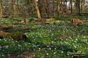Frühling im Wald am Landwehrfeld mit Panorama