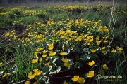 Feuchtwiesen an der Nette im April 1993 (Bild 1)