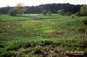 Feuchtwiesen an der Nette im April 1993 (Bild 3)