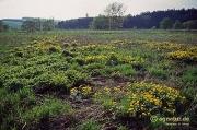 Feuchtwiesen an der Nette im April 1993 (Bild 2)