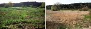 Feuchtwiesen an der Nette im April 1993 (Bild 5)