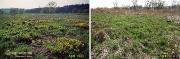 Feuchtwiesen an der Nette im April 1993 (Bild 4)