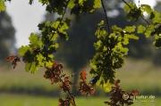 Farben des frühen Herbstes