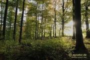 Im herbstlichen Wald