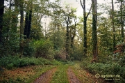 Frühherbst im Wald am Landwehrfeld bei Wohlenhausen im Jahr 2014