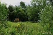 Schutzgebiet Wehrstedt an der Lamme
