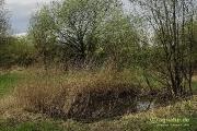 im Schutzgebiet Ohefeld: Ein Tümpel als Laichgewässer